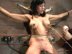 Nipples Pull 1 Way, Neck Rope Pulls The Other. 2 Options: Breathe Or Suffer. All While Cumming. - .
